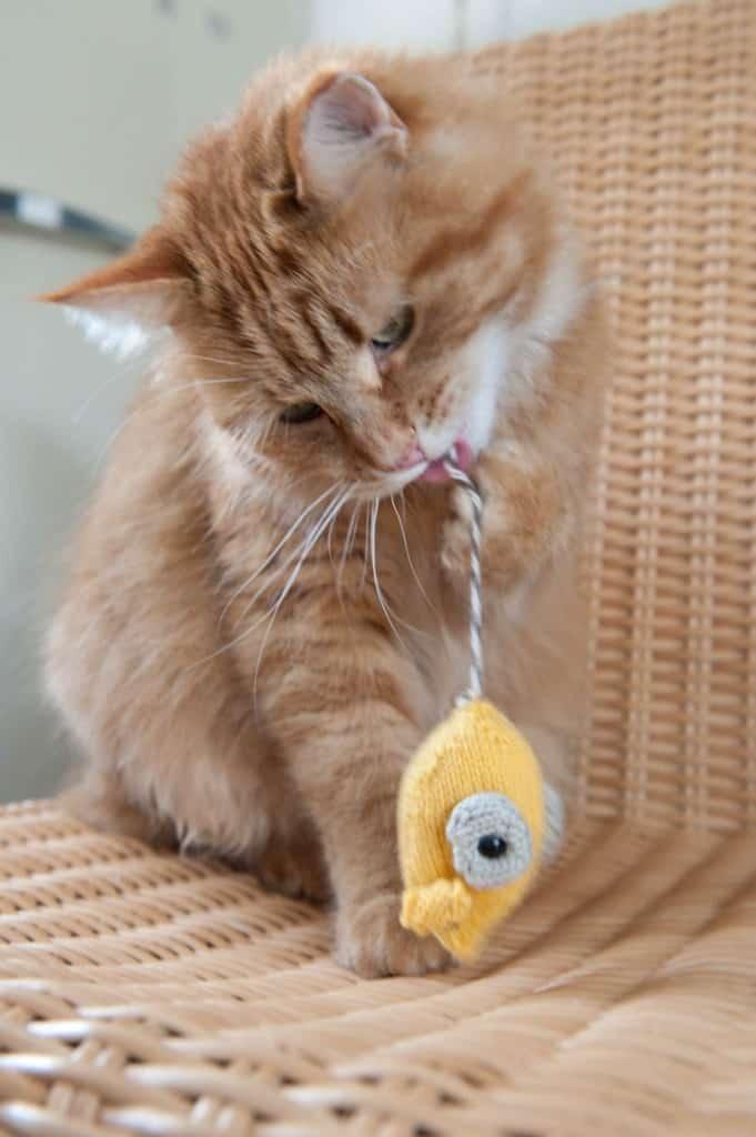knit-pets-148-681x1024