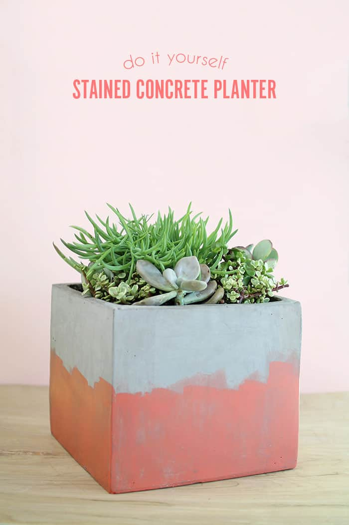 stained-concrete-planter