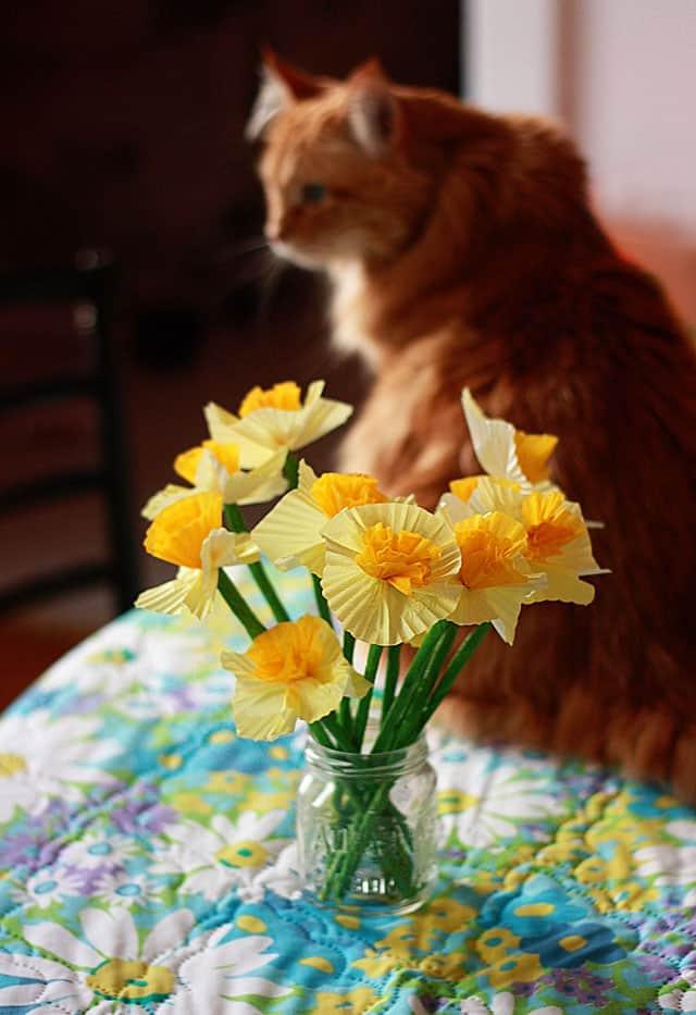 daffodil6402