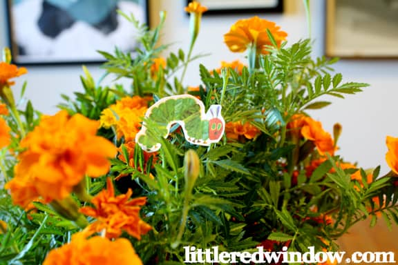 a green paper caterpillar in a potted plant with orange flowers