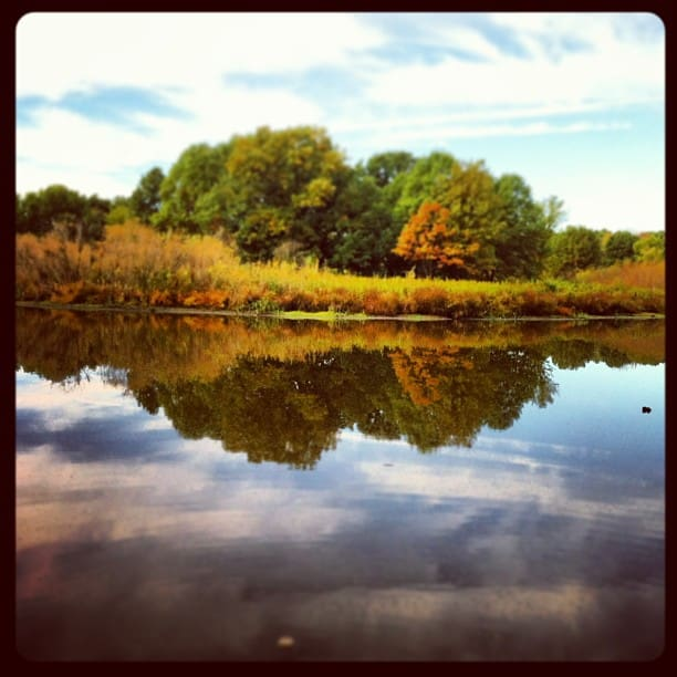 Palos Forest Preserve Cook County