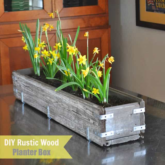 Wood trough with metal brackets holding planted daffodils