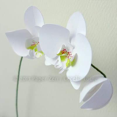 Orchid_3close