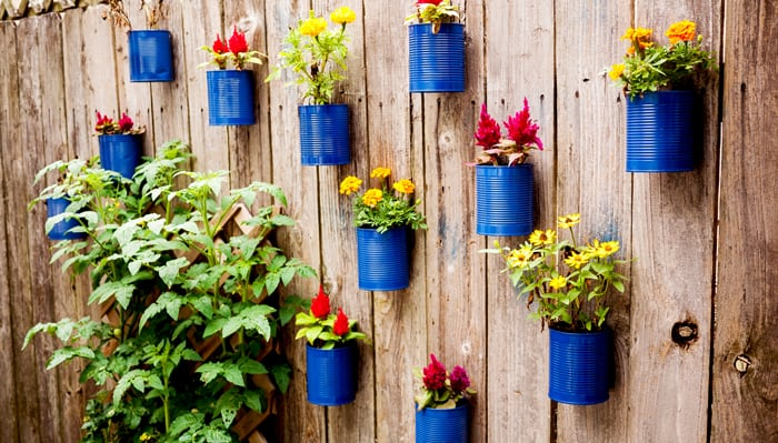 Wood fence with bright blue cans filled with flowers attached to it