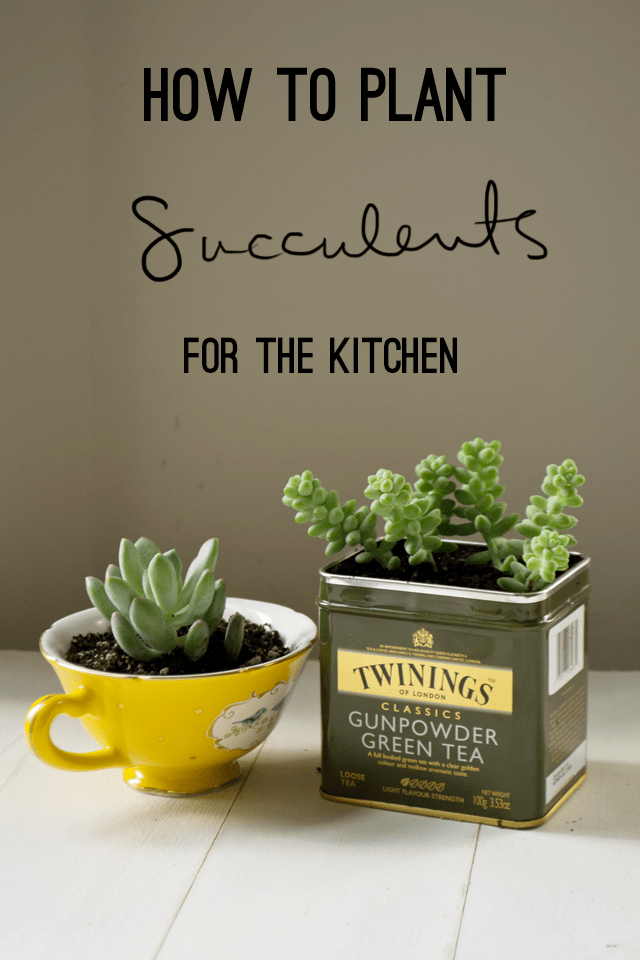 succulents planted ina teacup and tea container