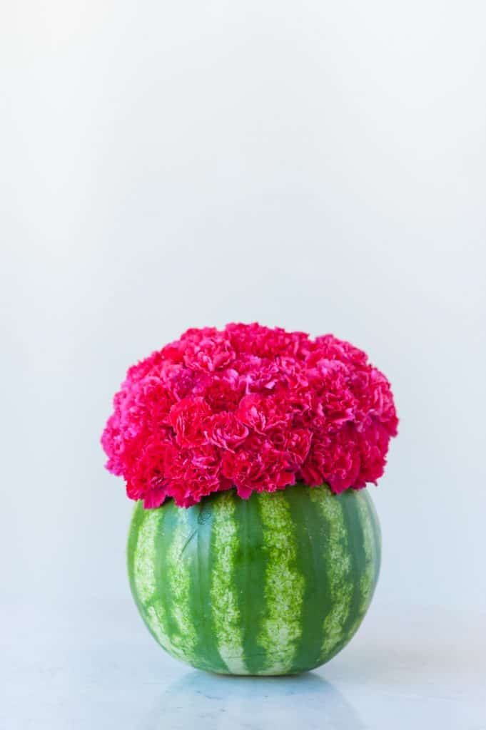Small round green real watermelon hollowed out and holding a bouquet of pink carnations